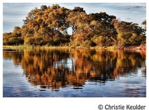 namibia tree okavango river