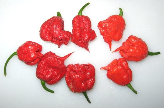 Hot hot hot ... Carolina Reaper