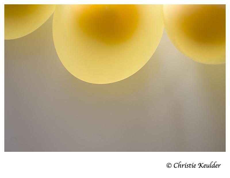 2b egg yolk miso fermentation