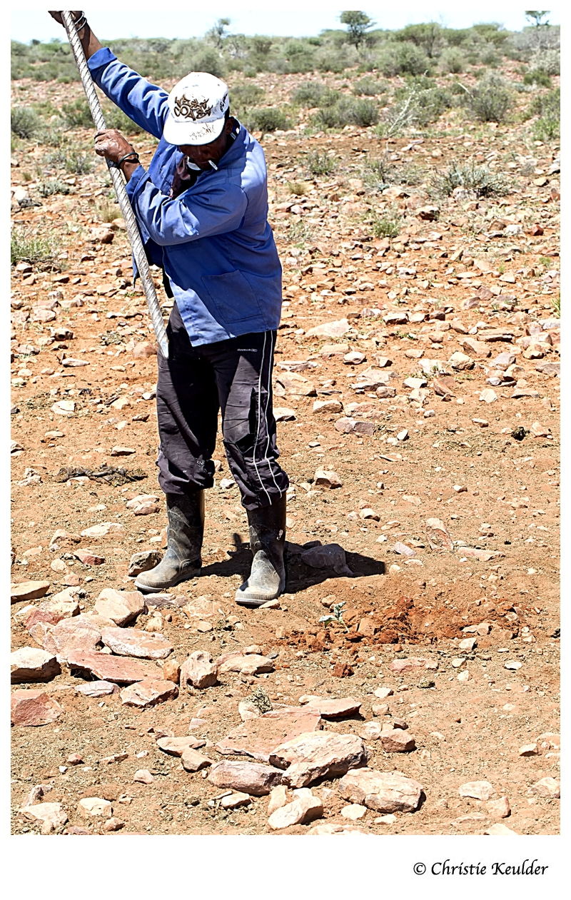 Digging for veldkos (nature produce) in Namibia's south - kambro.