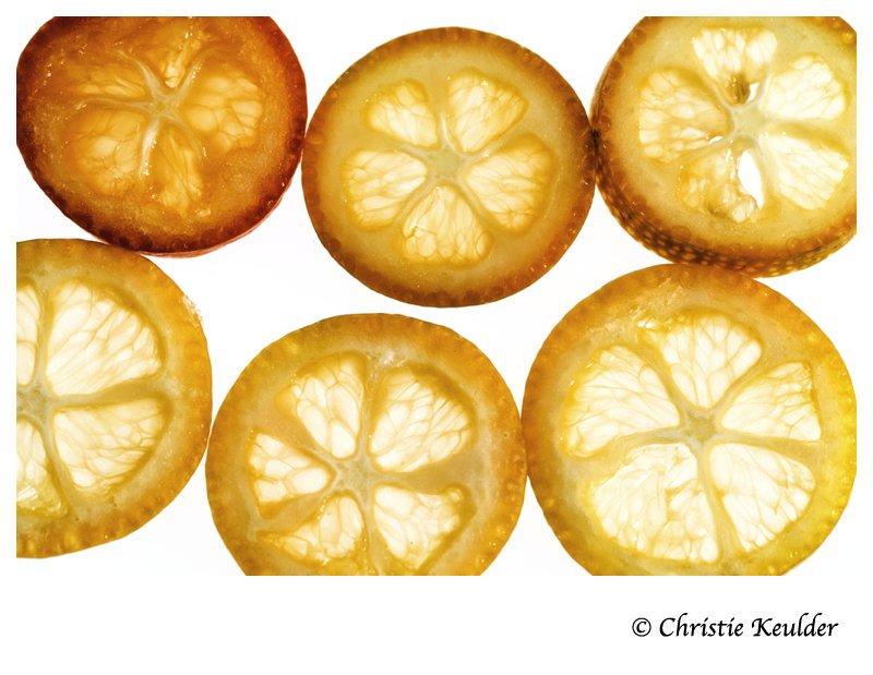Oval Kumquat (Citrus japonica Margarita)