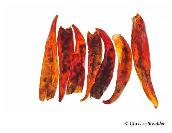 chili-red-braised-chicken